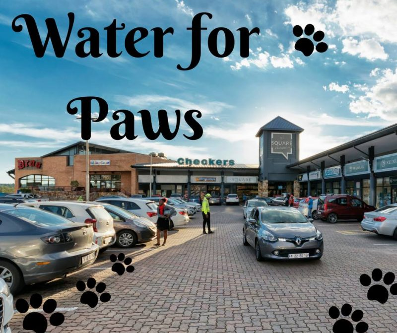 Sunninghill Square Shopping Centre | Thank You: Water for Paws - Helping Cape Town, parkinglot , shopping center
